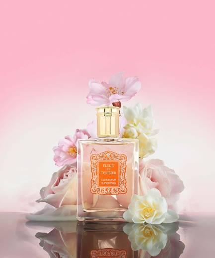 dp fleur de cerisier _fr